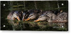 Acrylic Print featuring the photograph Ducks In A Row by Jan Piller