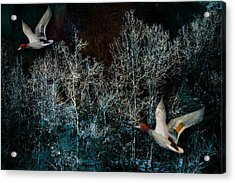 Acrylic Print featuring the photograph Ducks In Trees West Fork Number Three by Bob Coates
