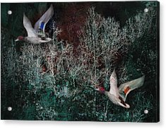 Acrylic Print featuring the photograph Ducks In Trees West Fork Number Two by Bob Coates
