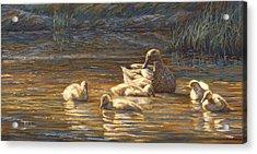 Ducks Acrylic Print by Lucie Bilodeau