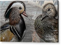 Ducks - Mandarin Ducks  Acrylic Print by Liane Wright