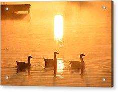 Ducks On A Foggy Lake At Sunrise Acrylic Print