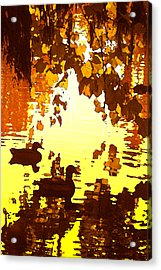 Ducks On Red Lake B Acrylic Print by Amy Vangsgard