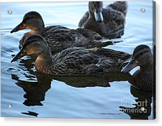 Ducks Reflecting Acrylic Print