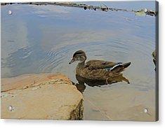 Ducky One Acrylic Print