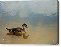Ducky Two Acrylic Print