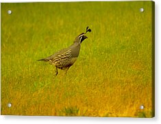 Dude Dont Shoot Me Acrylic Print by Jeff Swan