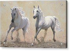 Due Cavalli Acrylic Print by Danka Weitzen