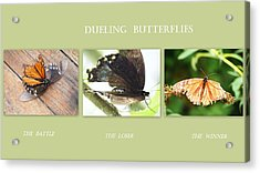 Dueling Butterflies Collage Acrylic Print by Margie Avellino