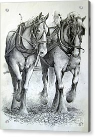 Acrylic Print featuring the drawing Duke And Molly by Carol Hart