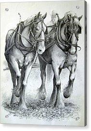 Duke And Molly Acrylic Print by Carol Hart
