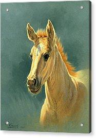 Dun Colt Portrait Acrylic Print by Paul Krapf