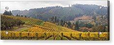 Dundee Oregon Vineyards Scenic Panorama Acrylic Print