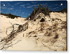 Dune Glue Acrylic Print by Adam Jewell