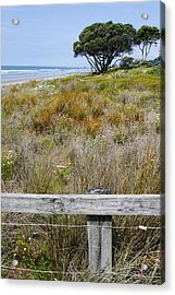 Dune Grass Acrylic Print by Les Cunliffe