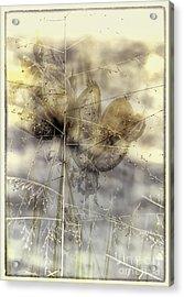 Dune Grass On Yucca Acrylic Print