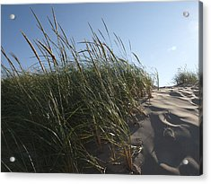 Dune Grass Acrylic Print by Tara Lynn