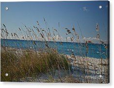 Acrylic Print featuring the photograph Dune Grasses by Judy Wolinsky