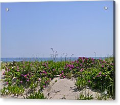 Dune Roses Acrylic Print