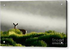 Dunes Deer P Acrylic Print