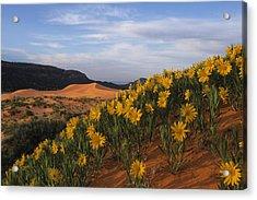 Dunes In Bloom Acrylic Print