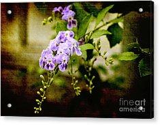 Duranta Bush Acrylic Print by Rosemary Aubut