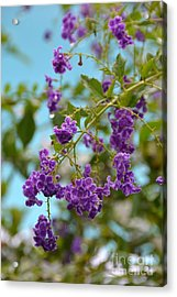Acrylic Print featuring the photograph Duranta- Fresh Morning by Darla Wood