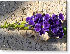 Acrylic Print featuring the photograph Duranta- Shadow Play 2 by Darla Wood
