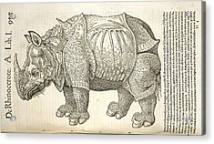 Durer's Rhinoceros, 16th Century Acrylic Print by Natural History Museum, London