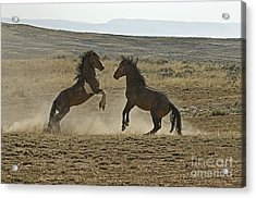 Dust Up At Mccullogh Peaks Acrylic Print by Bob Dowling