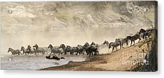 Acrylic Print featuring the photograph Dusty Crossing by Liz Leyden