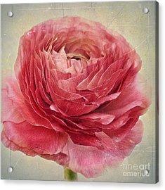Dusty Pink Acrylic Print by Priska Wettstein