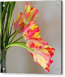 Dutch Tulips Acrylic Print