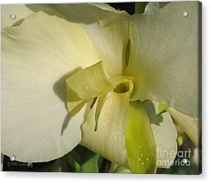 Acrylic Print featuring the photograph Dwarf Canna Lily Named Ermine by J McCombie