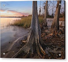 Dwarf Cypress Trees Lake Pontchartrain Acrylic Print by Tim Fitzharris
