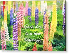 Each Day Is A New Beginning Colorful Lupine Flowers Acrylic Print by Beverly Claire Kaiya