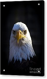 Eagle 2 Acrylic Print by Jim McCain