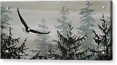 Eagle And Cedars Acrylic Print by James Williamson