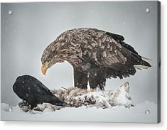 Eagle And Raven Acrylic Print by Andy Astbury