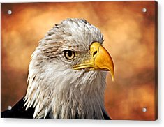 Eagle At Sunset Acrylic Print by Marty Koch