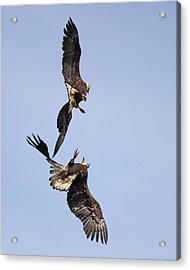 Eagle Ballet Acrylic Print by Randy Hall