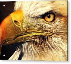 Eagle Eye 7 Acrylic Print by Marty Koch