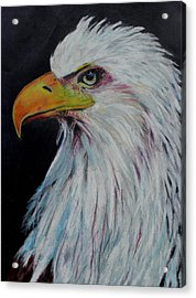 Eagle Eye Acrylic Print by Jeanne Fischer