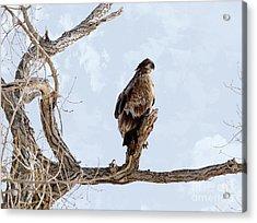 Eagle Eye Acrylic Print by Lori Tordsen