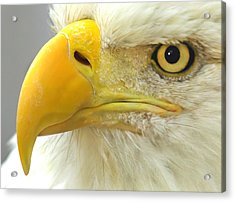 Eagle Eye Acrylic Print by Shane Bechler