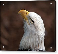 Eagle Eye Acrylic Print by Tammy Smith