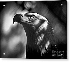 Eagle In Shadows Acrylic Print