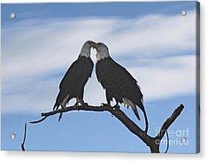 Eagle Love Acrylic Print