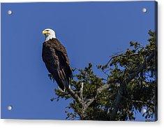 Eagle On Blue Acrylic Print