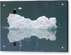 Eagle On Ice Acrylic Print by Shoal Hollingsworth